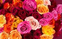 Rosen online bestellen