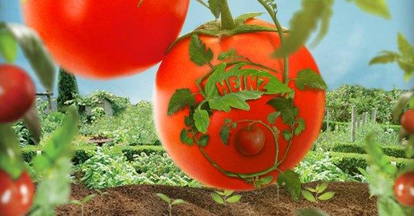 Kostenlose Heinz Ketchup Tomatensamen