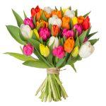 37 bunte Tulpen bei BlumeIdeal für 21,98€ inklusive Lieferung