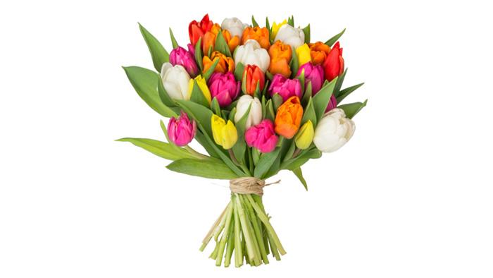 36 bunte Tulpen