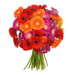 41 bunte Gerbera Blumen bei BlumeIdeal für 22,98€ liefern lassen