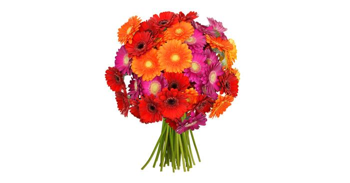 Bunte Gerbera Blumen