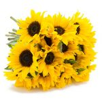 15 Sonnenblumen bei BlumeIdeal für 20,98€ online bestellen