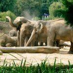 Tagesticket für den Kölner Zoo für 10,90€ (anstatt 19,50€)