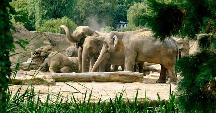 Tagesticket für den Kölner Zoo