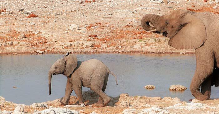 Schnäppchen-Flüge nach Namibia