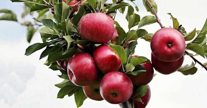 Obst selber pflücken - Mundraub.org