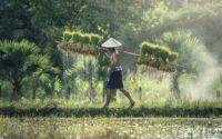 Günstige Flüge nach Kambodscha