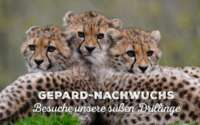 Allwetter Zoo Münster