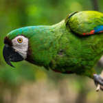 Günstige Flüge nach Ecuador