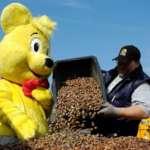 Haribo Kastanienaktion 2019: 10kg Kastanien oder 5kg Eicheln = 1kg Haribo Süßigkeiten [in Grafschaft]