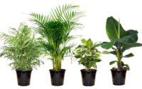 Exotische Zimmerpflanzen