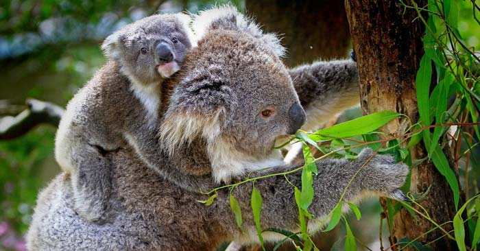 "Dokumentation ""Australiens Nationalparks"""