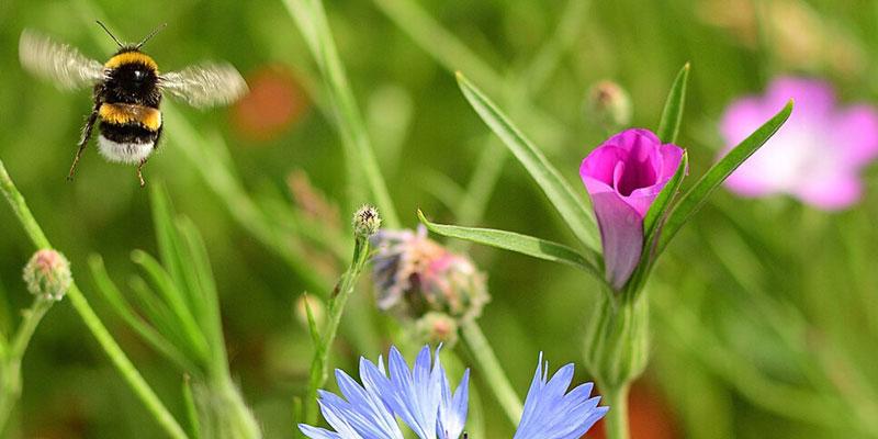 Kostenlose Blumensamen