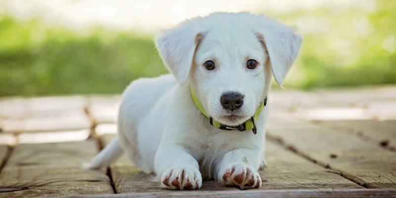 5€ Amazon Haustier Gutschein ab 25€ Bestellwert