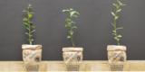 Gratis Baumsetzlinge durch die Blume2000 Baumaktion