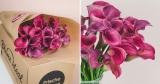 33 pinke Callas Blumen für 25,98€ bei BlumeIdeal