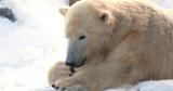 Tageskarte Erlebnis Zoo Hannover für 9,90€ oder 6,50 für Kinder