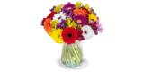 33 bunte Gerbera Blumen & Alstroemeria für 27,98€ liefern lassen