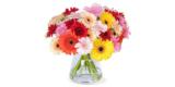 40 bunte Gerbera Blumen für 23,98€ liefern lassen