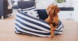 Hunter Sale (Spielzeug, Halsbänder, Näpfe, etc. für Hunde & Katzen) bei Vente-Privee