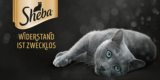"""[GRATIS] Sheba Creamy Snack für Katzen über Send Me a Sample / """"Schick mir eine Probe"""""""