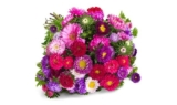 33 Sommerastern mit über 100 Blüten für 21,94€ inkl. Versand
