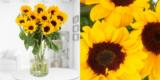 10 Sonnenblumen bei Blume 2000 für 10€ inklusive Versand