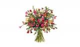 44 Spray-Nelken mit 200 Blüten für nur 20,94€ bei BlumeIdeal