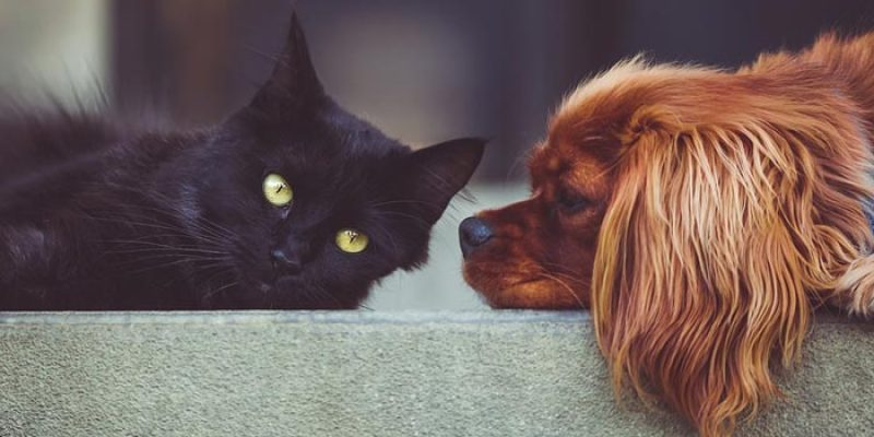 15% Zooplus Gutschein auf Angebote für Hunde & Katzen im WSV